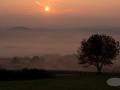 Nebel-Baum