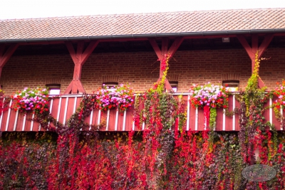 Herbst Burg