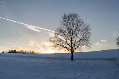 Baum (1 von 1)